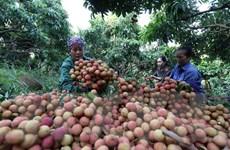 Nông nghiệp chuyển dịch mạnh mẽ từ sản xuất tới thị trường