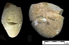 Phát hiện công cụ mài bằng đá niên đại khoảng 350.000 năm tại Israel