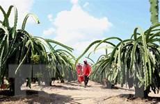 Hiệp định UKVFTA: Kỳ vọng rộng mở cho nông sản Việt sang Anh