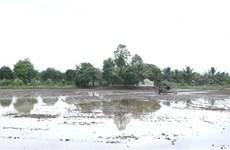 Hậu Giang: Phòng, chống xâm nhập mặn trong dịp Tết Nguyên đán