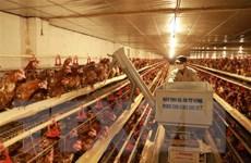 Đại hội Đảng XIII: Ưu tiên nguồn lực, tập trung tái cơ cấu nông nghiệp