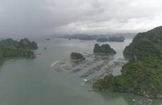 Doanh nghiệp đổ trộm đất đá xuống vịnh Bái Tử Long, người dân bức xúc