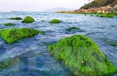 Khám phá vẻ đẹp xanh mướt của mùa rêu Nam Ô tại Đà Nẵng