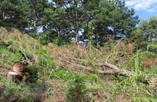 Lâm Đồng: Xử phạt đối tượng lấn chiếm đất rừng phòng hộ