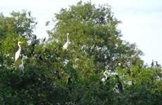 Du lịch sinh thái - hướng bảo tồn bền vững các vườn chim tại Cà Mau