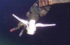 Trung Quốc phát triển loại robot mềm phục vụ thám hiểm dưới biển sâu