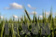 Chỉ số giá lương thực thế giới tăng lên mức cao nhất kể từ năm 2014