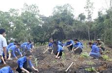 Đoàn Thanh niên TTXVN trồng 10.000 cây xanh hưởng ứng Tết trồng cây
