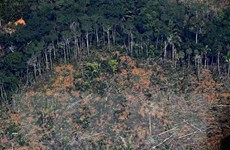 Brazil kêu gọi quốc tế đầu tư 1 tỷ USD để ngăn nạn phá rừng Amazon
