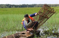 Du lịch nông nghiệp ở ĐBSCL: Liên kết, gắn với văn hóa bản địa