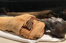 Mở cửa sảnh trưng bày xác ướp hoàng gia nghìn năm tuổi ở Ai Cập
