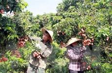 Đưa nông sản Việt ra thế giới: Nỗ lực tìm 'thị trường khó tính'