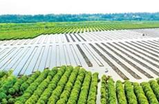 Quảng Ngãi: Lấn chiếm rừng phòng hộ làm hồ nuôi thủy sản