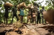 Đi tìm lời giải cho thực trạng lao động trẻ em trong ngành cacao