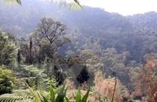 [Photo] Giữ gìn kho báu rừng nguyên sinh ở khu vực Trung Trường Sơn