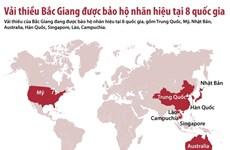[Infographics] Danh sách các nước bảo hộ nhãn hiệu vải thiều Bắc Giang