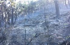 Bình Định: Kịp thời khống chế đám cháy lớn trên núi Bà Hỏa