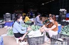 Quảng bá sản phẩm xoài xanh Việt Nam tại thị trường Australia
