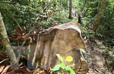 Gia Lai: Rừng giàu Kbang 'chảy máu' vô cùng nghiêm trọng