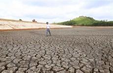 Khô hạn và nhiễm mặn trên diện rộng tại tỉnh Quảng Nam