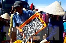 Ninh Thuận với giải pháp giúp ngư dân khai thác thủy sản hợp pháp