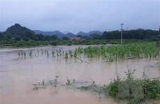 Dự báo có những cơn bão mạnh ảnh hưởng trực tiếp đến Việt Nam