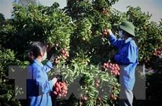 Bắc Giang: Lục Ngạn thực hiện thành công 'mục tiêu kép'