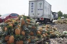 Long An không để ùn ứ, đứt gãy chuỗi cung ứng nông sản