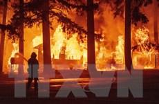 Cháy rừng gây thiệt hại nghiêm trọng tại Mỹ, Thổ Nhĩ Kỳ và Hy Lạp
