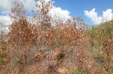 Trung Bộ nắng nóng còn kéo dài, đề phòng nguy cơ cháy rừng