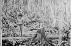 60 năm thảm họa da cam ở Việt Nam: Cuộc chiến thảm khốc