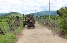 Gia Lai: Bước bứt phá ngoạn mục của vùng căn cứ cách mạng Ayun