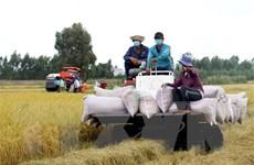 Tạo thuận lợi cho việc tiếp cận nguồn vốn thu mua thóc, gạo