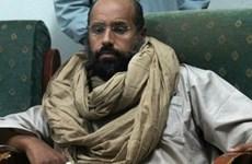 Truy lùng con trai của nhà lãnh đạo bị lật đổ Gaddafi ở Libya