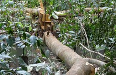 Phú Yên chấm dứt dự án chuyển đổi 463ha rừng sang mục đích khác