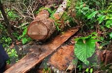 Vụ phá rừng lớn nhất Hà Giang: Khởi tố bị can, tạm giam 5 đối tượng