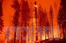 Tổng thống Mỹ Joe Biden ban bố tình trạng khẩn cấp tại California