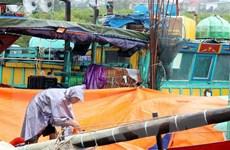 Hải Phòng và Thái Bình chủ động ứng phó với cơn bão số 5