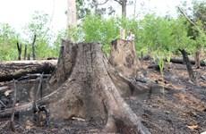 Bình Định: Điều tra vụ phá hơn 5ha rừng tự nhiên ở xã Tây Thuận
