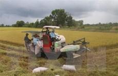 Các địa phương tháo gỡ khó khăn trong thu hoạch, vận chuyển lúa