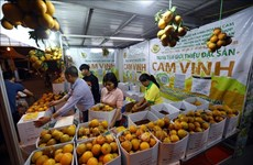 Nghệ An: Đưa đặc sản cam Vinh lên sàn thương mại điện tử
