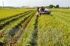 Phát triển tối đa diện tích sản xuất vụ Đông, đảm bảo hiệu quả kinh tế