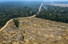 Mỹ sẽ đưa ra một hiệp ước khu vực Amazon nhằm giảm thiểu nạn phá rừng