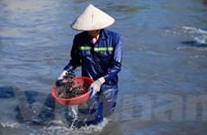 [Video] Hàng trăm người dân liều mình mò than ở sông Mông Dương