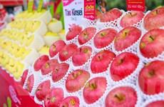 Cận cảnh loại táo Aomori nổi tiếng của Nhật Bản tại Hà Nội