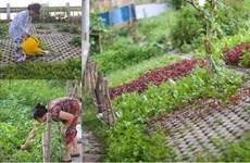 Người Hà Nội đua nhau trồng rau trong hốc bêtông độc đáo