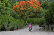 Hòa mình với thiên nhiên trong vườn sinh thái Đông Thế