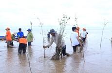 FPT phối hợp với Hạnh phúc xanh trồng 2.000 cây bần tại Sóc Trăng