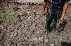 Hạn mặn Đồng bằng sông Cửu Long: Những hậu quả khôn lường