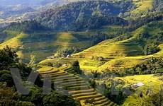 Ngắm những thửa ruộng bậc thang đẹp lộng lẫy ở Hoàng Su Phì